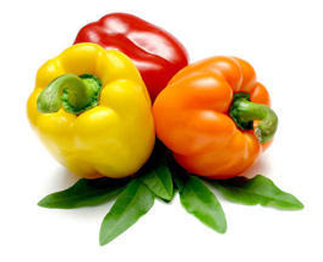 ParsFame International Trade Company For export Iranian Vegetables. Fresh Vegetables, Fresh Organic Vegetables, Organic Vegetables, Fresh Bell Pepper, Persian Bell Pepper, Iran Bell Pepper suppliers, Organic Bell Pepper, Bell Pepper Exporter, Export Bell Pepper from Iran, Bell Pepper in Iran, Iranian Bell Pepper exports, Export Vegetables, Iranian Bell Pepper, Persian Bell Pepper and Export Bell Pepper. PF one of the best Sellers.